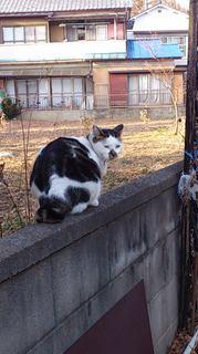 funaブサ猫.jpg