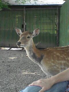 funa奈良公園の住人.jpg